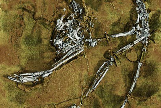 Scheletul celui mai vechi stramos cunoscut al oamenilor a fost descoperit in China! FOTO + VIDEO