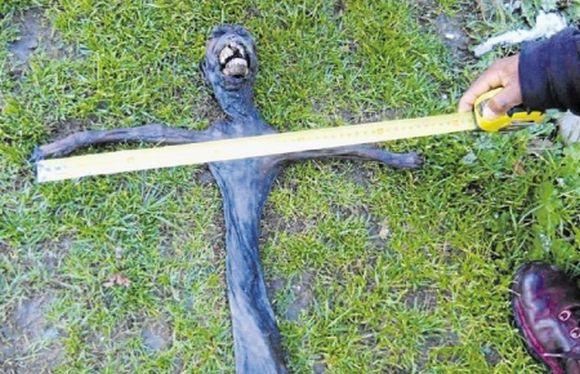 Creatura bizara descoperita de un turist! Oamenii de stiinta cred ca este de origine extraterestra! FOTO