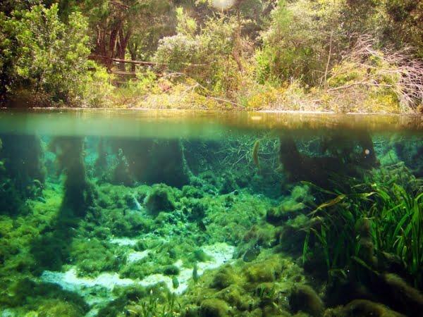 Padure submarina veche de 50.000 de ani, descoperita in regiunea de coasta a statului Alabama!