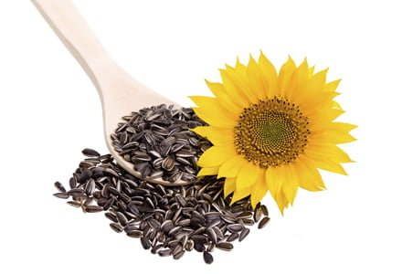 Sunflower seed on a wooden spoon with sunflower
