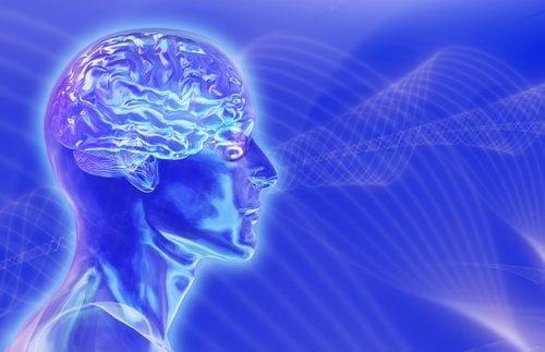 REALIZARE UIMITOARE a cercetatorilor austrieci dupa ce au obtinut un creier uman in miniatura! FOTO