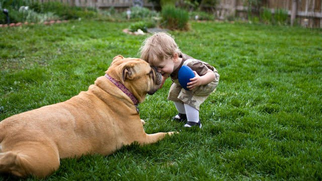 gty_toddler_and_dog_jt_120708_wg