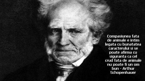 Compasiunea fata de animale e intim legata cu bunatatea caracterului si se poate afirma cu siguranta ca cel crud fata de animale nu poate fi un om bun – Arthur Schopenhauer
