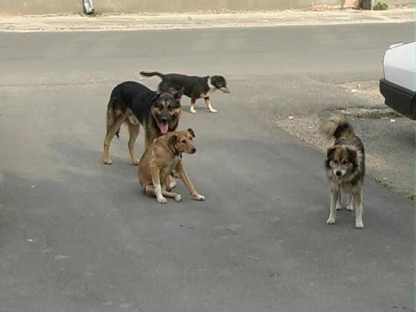 Copil de patru ani, sfasiat de mai multi caini maidanezi in zona Parcul Tei din Capitala! VIDEO