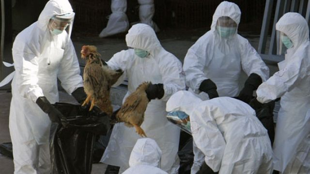 Gripa aviara revine cu un nou subtip! Alerta in Hong Kong!