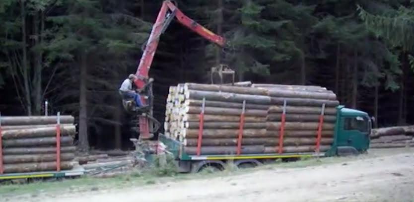 Mafia lemnului din Muntii Apuseni vinde ILEGAL aurul verde la export!