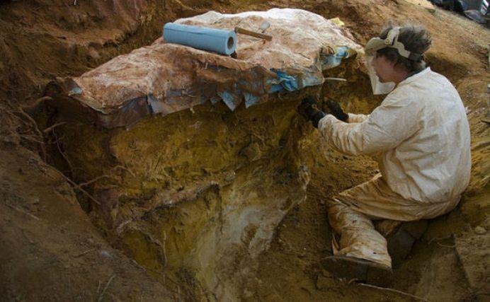 Fosilele unei noi specii de mamifer au fost descoperite langa Alba Iulia!