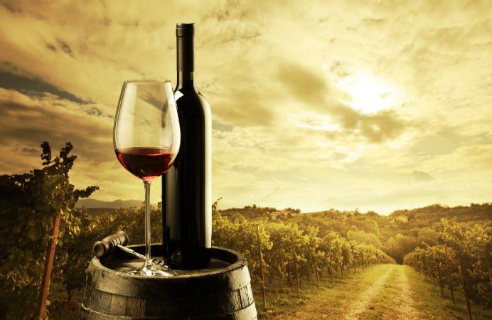 productie de vin
