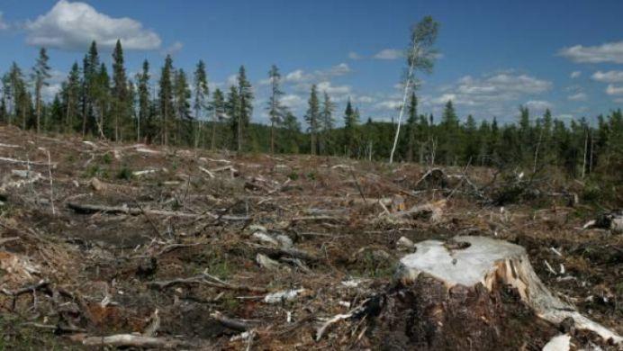 O tara din Europa este PRIMA DIN LUME care interzice complet taierea copacilor! La noi cand vedem o astfel de lege?