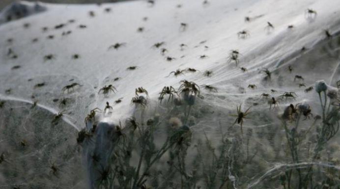 Imagini DESPRINSE din Biblie! A plouat cu MILIOANE de paianjeni!