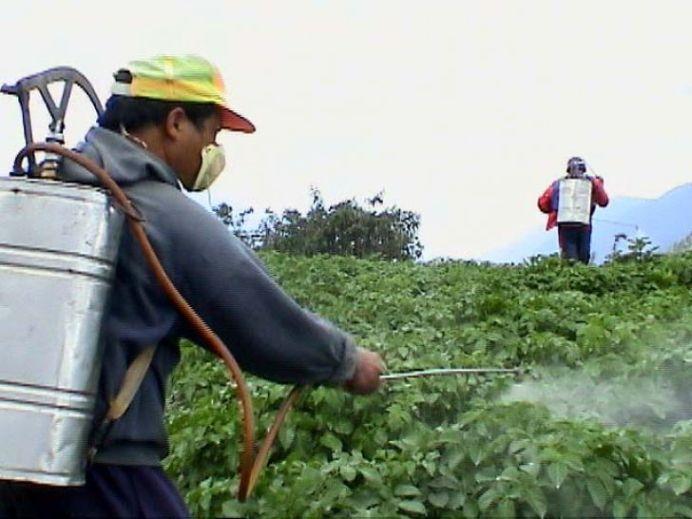 Daca le speli nu te ajuta la NIMIC! Cum sa alegi legumele FARA PESTICIDE de la piata!