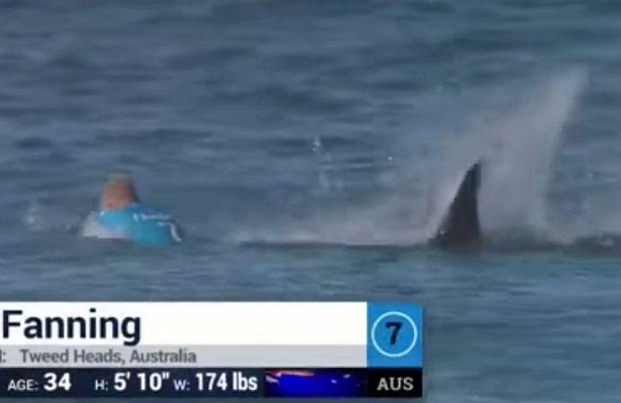 VIDEO INCREDIBIL! Surfer ATACAT de RECHIN in direct la televizor!