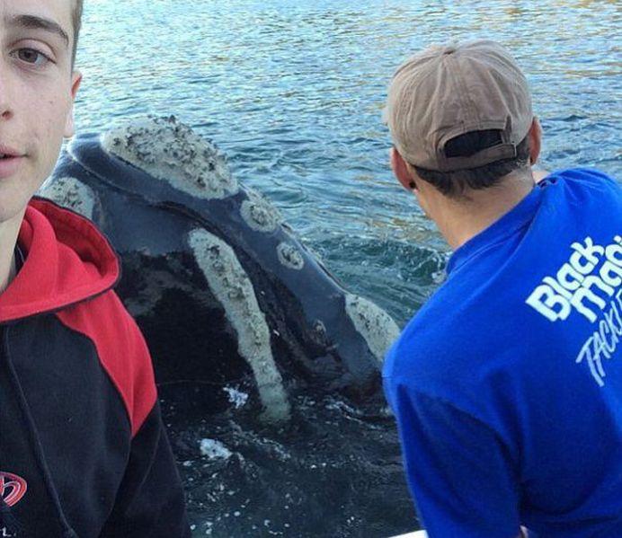 VIDEO INCREDIBIL! O balena care se sufoca, din cauza unor pungi de plastic, vine si cere ajutorul oamenilor!