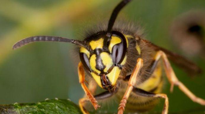 TRAGEDIE – A murit dupa ce l-a intepat o viespe!