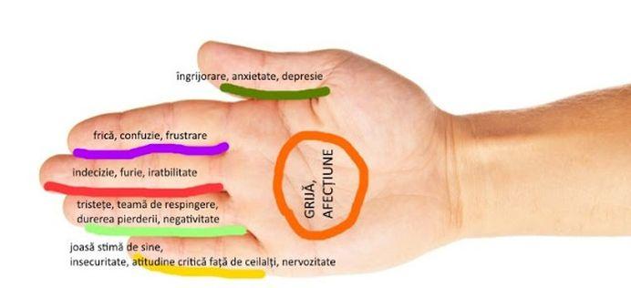 AUTOVINDECARE! Fiecare deget este legat DIRECT de doua organe!