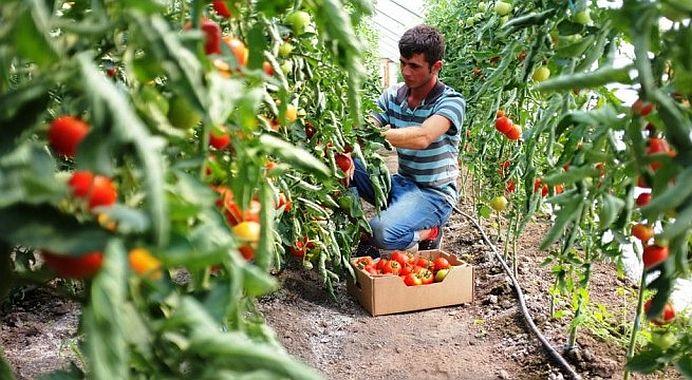 Daca vrei sa te faci fermier statul roman iti da GRATIS 50 de hectare de teren sa-l lucrezi! Cu o singura conditie!