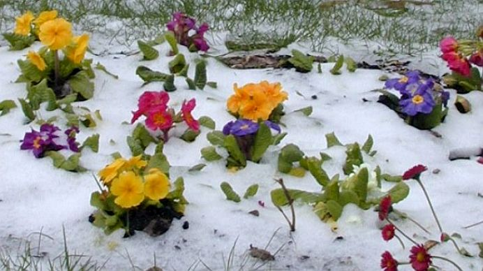 Prognoza meteo pe trei zile: frig, zapada si vant puternic!