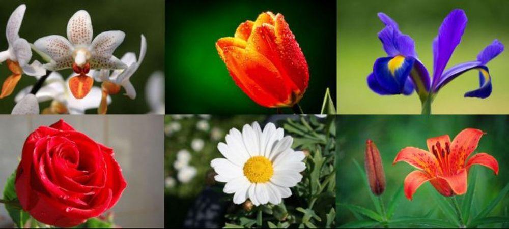 TEST – Spune-mi care-i floarea ta preferata, ca sa-ti spun ce fel de om esti!