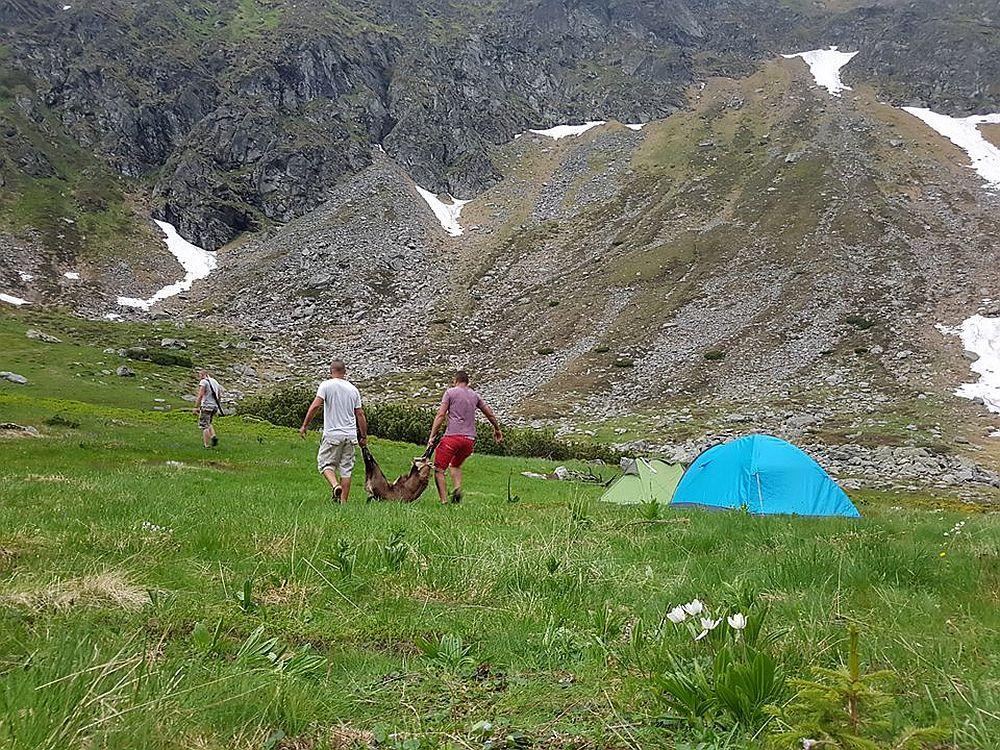 FOTO – Culmea tupeului: Capra neagra, protejata prin lege, IMPUSCATA sub ochii turistilor, in muntii Romaniei! O vedeta TV a vazut totul!