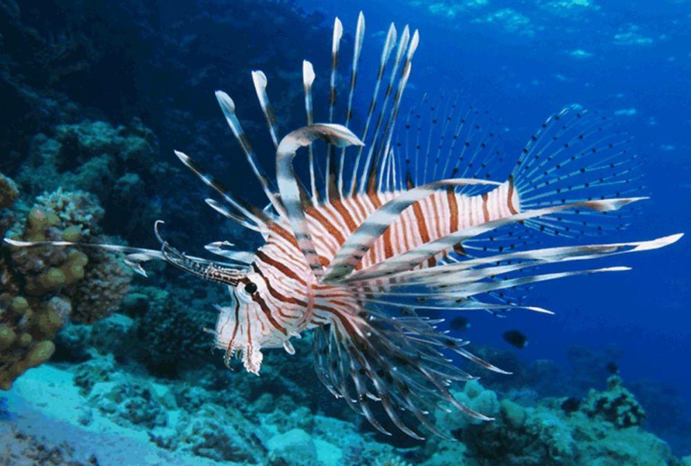 Cercetatorii sunt ingrijorati: O noua specie de peste, introdusa de om, cucereste Marea Mediterana!