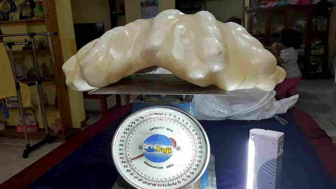 perla uriasa