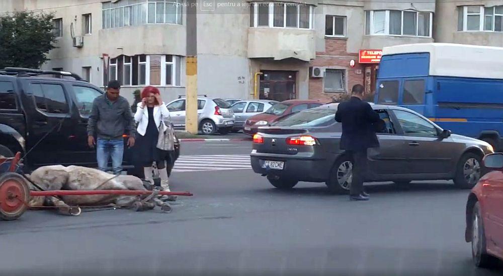 IMAGINI HORROR la Constanta! Barbat RUPT IN BATAIE de politisti, dupa ce a vrut sa-si OMOARE CALUL in mijlocul drumului!