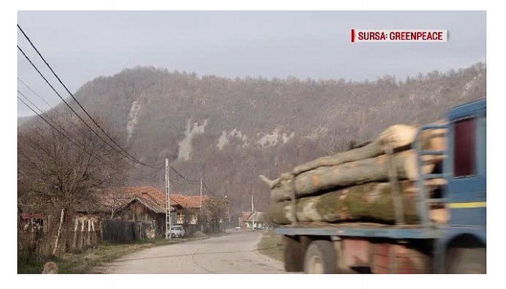 Greenpeace au urmarit cat se taie dintr-o padure de la marginea unui sat obisnuit din Romania! Au ramas SOCATI cand au vazut ZECI DE CAMIOANE cu lemn!