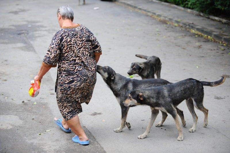 DEZBATEREA CARE INCINGE INTERNETUL! Ar trebui trimise in judecata animalele?