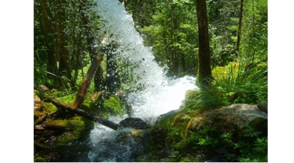 Cea mai pura apa din lume izvoraste din Bucegi, in mijlocul padurii! Cercetatorii spun ca e mai buna decat Evian sau Perrier!