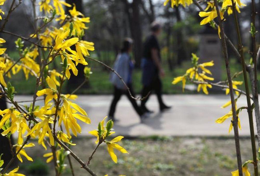 Cum va fi vremea de Florii si Pasti: Meteorologii anunta ca putem avea si 25 grade Celsius!