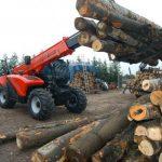 Activistii de mediu, acuzati ca sunt platiti sa denigreze România și să distrugă industria locală a lemnului