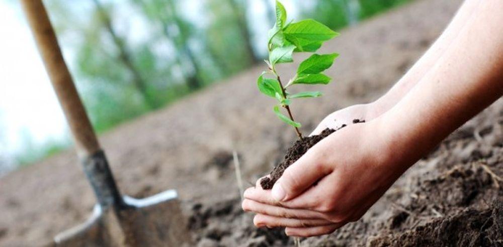 Se intampla si lucruri bune in padurile din Romania! Copaci plantati pe o suprafata cat zece terenuri de fotbal!