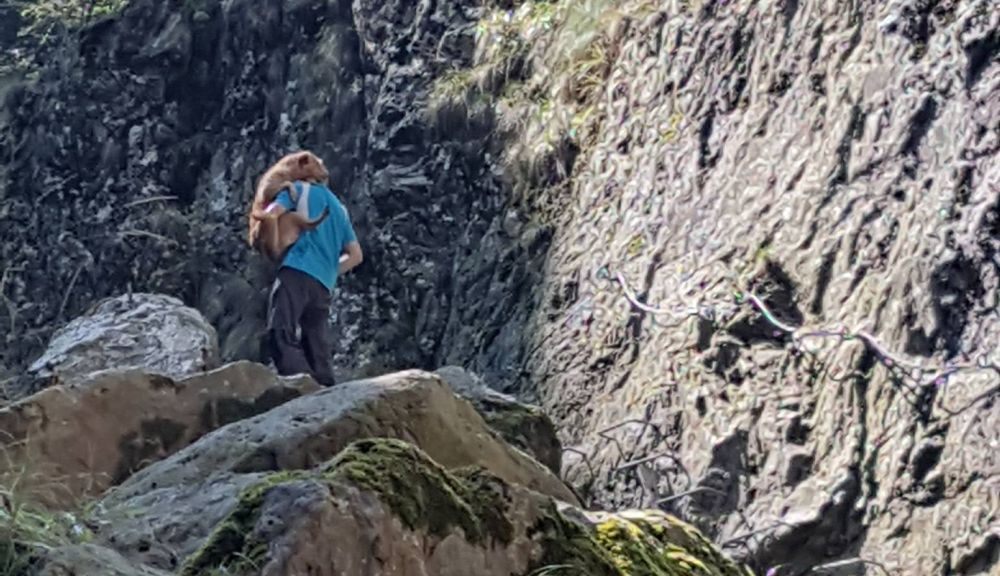 FOTO – Caine abandonat in Muntii Fagaras si gasit de un turist! L-a carat in spate pana jos
